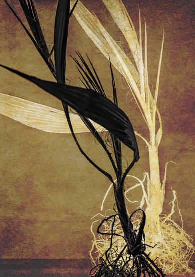 Palm Pair|DigitaldeAndy Sotiriou| Compra arte en Flecha.es