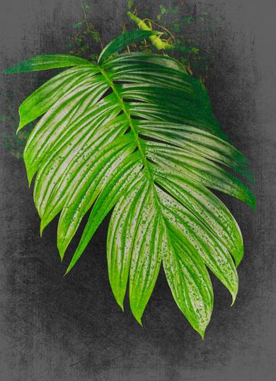 Ficus Pumila|DigitaldeAndy Sotiriou| Compra arte en Flecha.es