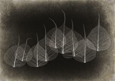 Leaf Lace  #01|DigitaldeAndy Sotiriou| Compra arte en Flecha.es