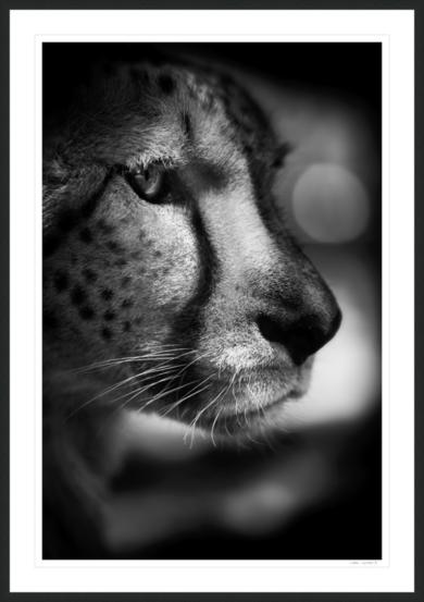 CONCENTRACIÓN|FotografíadeGABI GUIARD PHOTWILDGRAPHY| Compra arte en Flecha.es