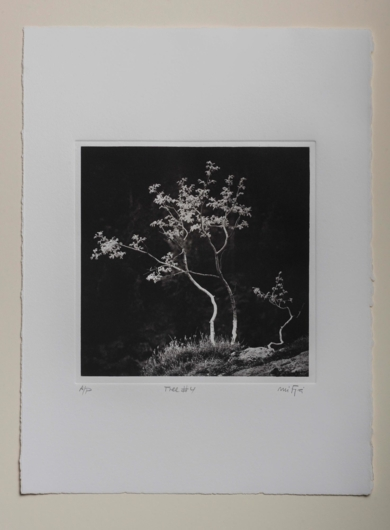 Tree#4|FotografíadeCarles Mitjà| Compra arte en Flecha.es