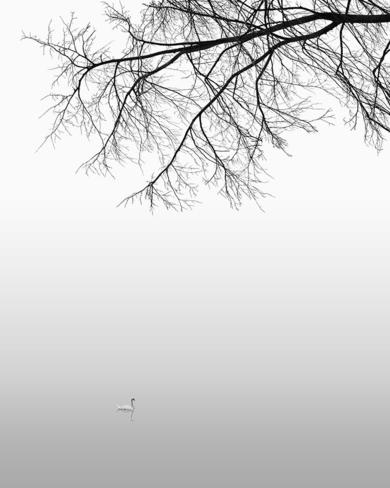Water series 02  :  Regents Park, London|FotografíadeAndy Sotiriou| Compra arte en Flecha.es