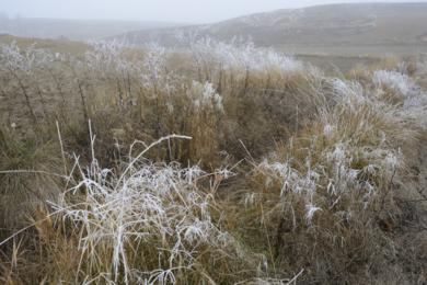 Frozen Browns|FotografíadeCano Erhardt| Compra arte en Flecha.es