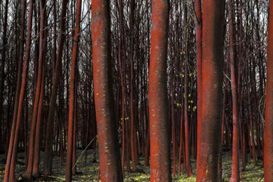 Bosque rojo|FotografíadeLeticia Felgueroso| Compra arte en Flecha.es