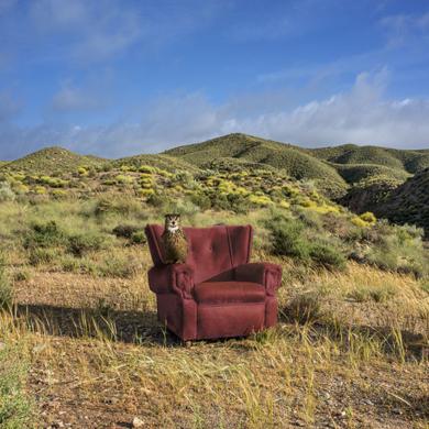 Retrato de una lechuza, primavera en el desierto|FotografíadeLeticia Felgueroso| Compra arte en Flecha.es