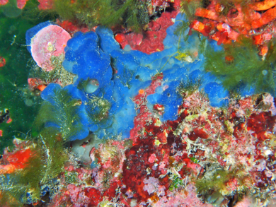 Color sobre roca|FotografíadeBeatriz García Infante| Compra arte en Flecha.es