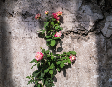 Rose & Rubble, Lima, Peru|FotografíadeAndy Sotiriou| Compra arte en Flecha.es