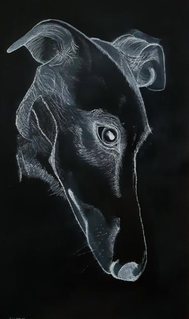 Galgo 01|DibujodeAntonio  Vázquez-Martín| Compra arte en Flecha.es