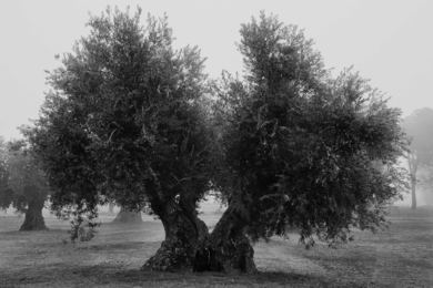 Melancolía 1|FotografíadeAna González| Compra arte en Flecha.es