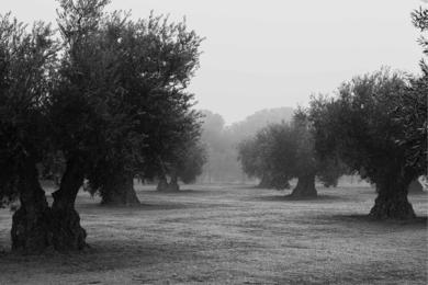 Melancolía 3|FotografíadeAna González| Compra arte en Flecha.es