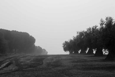 Melancolía 4|FotografíadeAna González| Compra arte en Flecha.es