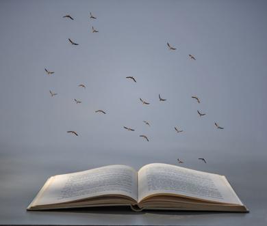 Libro abierto|FotografíadeLeticia Felgueroso| Compra arte en Flecha.es