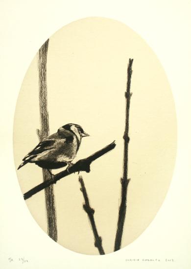 Jilguero entre ramas|DibujodeEnrique González| Compra arte en Flecha.es