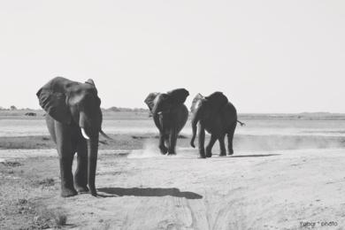 SIMPLY ELEPHANTS|FotografíadeYabar| Compra arte en Flecha.es