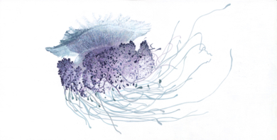 Cephea Cauliflower|DibujodeCarlos J. Márquez| Compra arte en Flecha.es