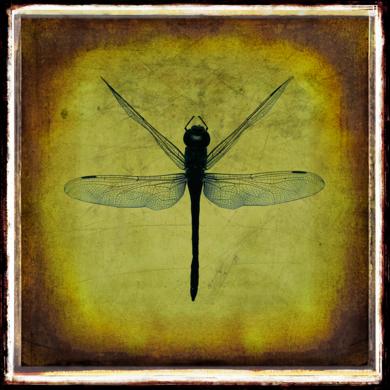 Dragonfly / Libélula|FotografíadeAndy Sotiriou| Compra arte en Flecha.es