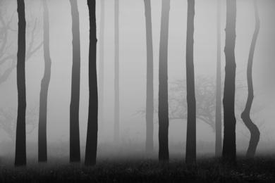 Mist series,  #02|FotografíadeAndy Sotiriou| Compra arte en Flecha.es