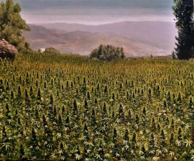 Campo de Kif, Shauen (Marruecos)|PinturadeFran Jiménez  (Âli Qasim)| Compra arte en Flecha.es