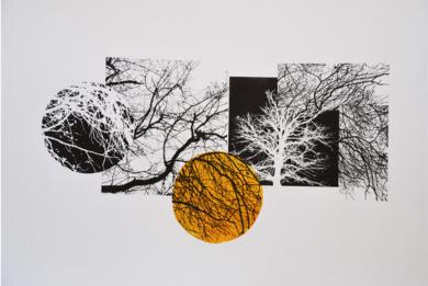 El bosque translúcido 10|Obra gráficadeJosep Pérez González| Compra arte en Flecha.es