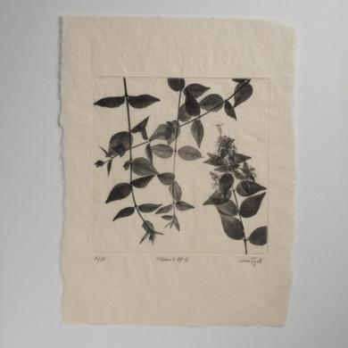 Plant#2|FotografíadeCarles Mitjà| Compra arte en Flecha.es