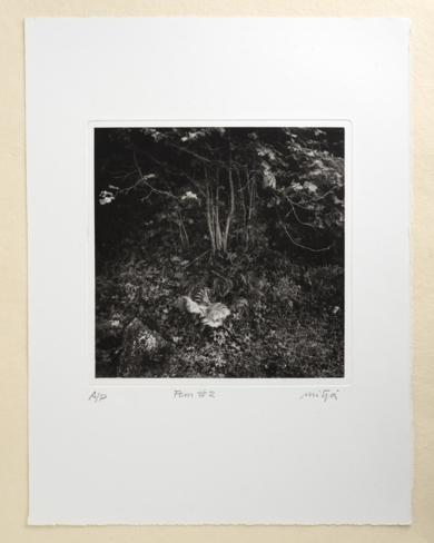 Fern #2|FotografíadeCarles Mitjà| Compra arte en Flecha.es