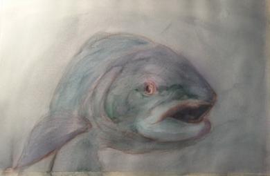 Trucha 3|DibujodeOliverPlehn-Artist| Compra arte en Flecha.es