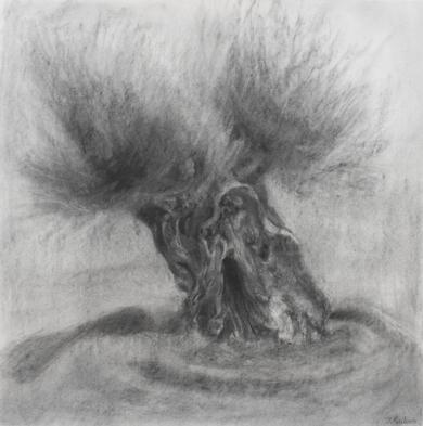 Olivo|DibujodeIgnacio Mateos| Compra arte en Flecha.es
