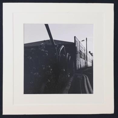 Miscanthus│autumn UK│acid-free photo paper│printed and produced in the UK│origin|FotografíadeJHIH YU CHEN| Compra arte en Flecha.es