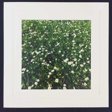 Daisy│acid-free photo paper│printed and produced in the UK│Origin|FotografíadeJHIH YU CHEN| Compra arte en Flecha.es