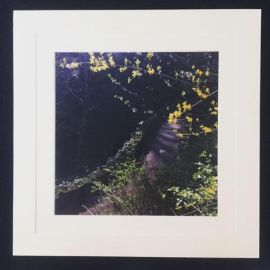 Spring fairy comes│acid-free photo paper│printed and produced in the UK│origin|FotografíadeJHIH YU CHEN| Compra arte en Flecha.es