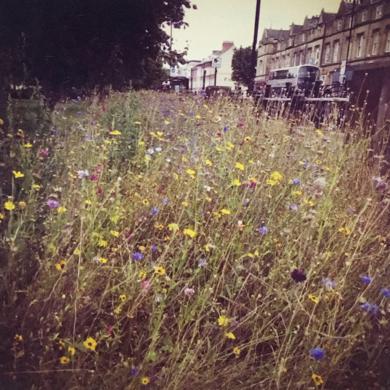 Summer and Autumn | Acid-free Photo Paper | Printed in the UK | Original|FotografíadeJHIH YU CHEN| Compra arte en Flecha.es