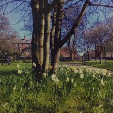 Early spring of daffodils2│acid-free photo paper│printed in the UK│Original work|FotografíadeJHIH YU CHEN| Compra arte en Flecha.es