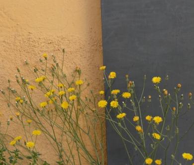 Split FotografíadeLizmenta  Compra arte en Flecha.es