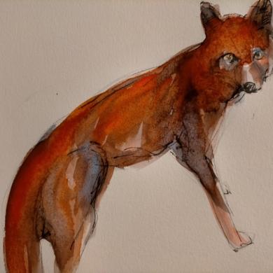 Zorro II|DibujodeOliverPlehn-Artist| Compra arte en Flecha.es