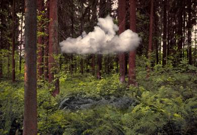 Nube en el bosque FotografíadeLeticia Felgueroso  Compra arte en Flecha.es