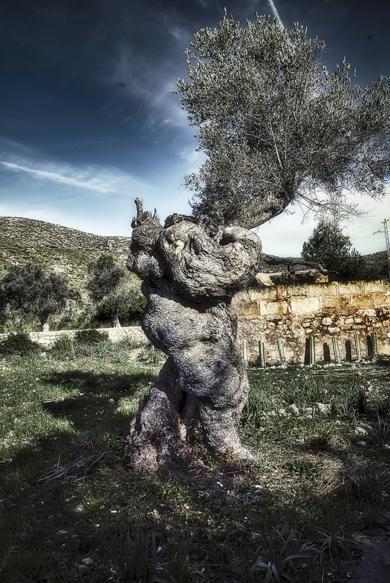 La Oliva de Artá (Mallorca)|DigitaldeJavier Lopez| Compra arte en Flecha.es
