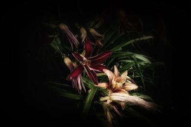 Jardín Botánico de Ginebra… Lirio de día|DigitaldeJavier Lopez| Compra arte en Flecha.es