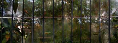 Jardines Secretos|FotografíadeAna Sanz Llorens| Compra arte en Flecha.es