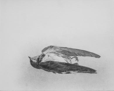 Golondrina Muerta|DibujodeMarta de la Sota| Compra arte en Flecha.es