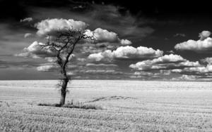 Donde los Sueños Nacen|FotografíadeIñigo Echenique| Compra arte en Flecha.es
