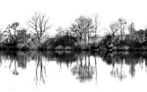 REFLEJOS b/n (de la serie Por el Miño. Foto nº 28)|FotografíadeLuis Arbex| Compra arte en Flecha.es