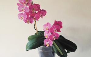 Floración de orquidea PinturadeJavier Ramos Julián  Compra arte en Flecha.es