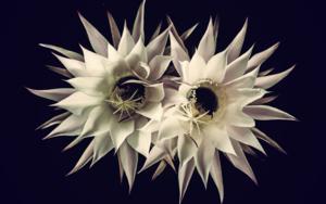 Cactus love DigitaldeEva Ortiz  Compra arte en Flecha.es