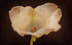 Flower porn|FotografíadeEva Ortiz| Compra arte en Flecha.es