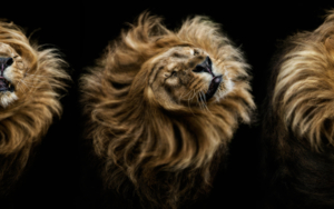 El Rey Sol|FotografíadePedro Jarque| Compra arte en Flecha.es