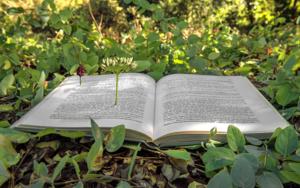 El libro y la primavera|FotografíadeLeticia Felgueroso| Compra arte en Flecha.es