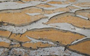 Lagunas|FotografíadeVerónica B. Loring| Compra arte en Flecha.es