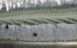 Invierno en los arados|FotografíadeVerónica Bustamante Loring| Compra arte en Flecha.es