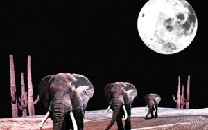 The  Elephants|CollagedeJaume Serra Cantallops| Compra arte en Flecha.es