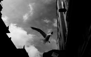 La Maleta de Ulises #4|FotografíadeJosé M. Feito| Compra arte en Flecha.es
